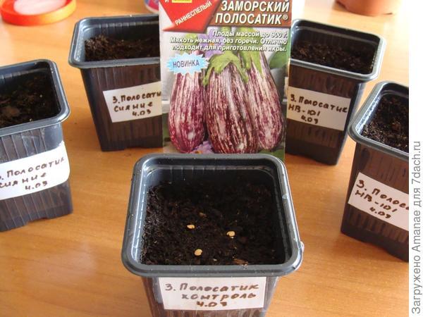 Посев сухими контрольных семян