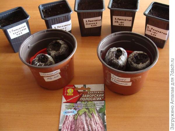 Семена посажены и готовы к перемещению в тепло