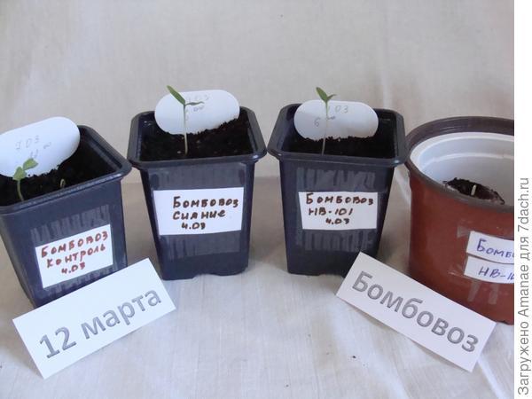 Результат всхожести семян на 12 марта