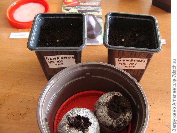 Посев семян в горшочки