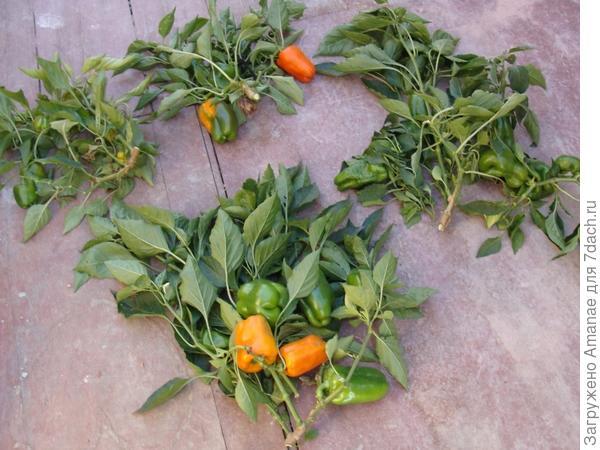 На кусту было различное количество плодов