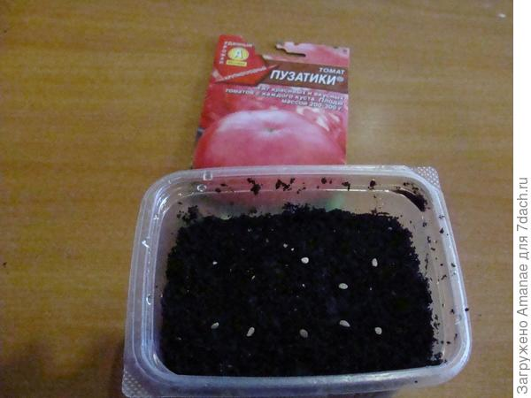 Посев семян Пузатики