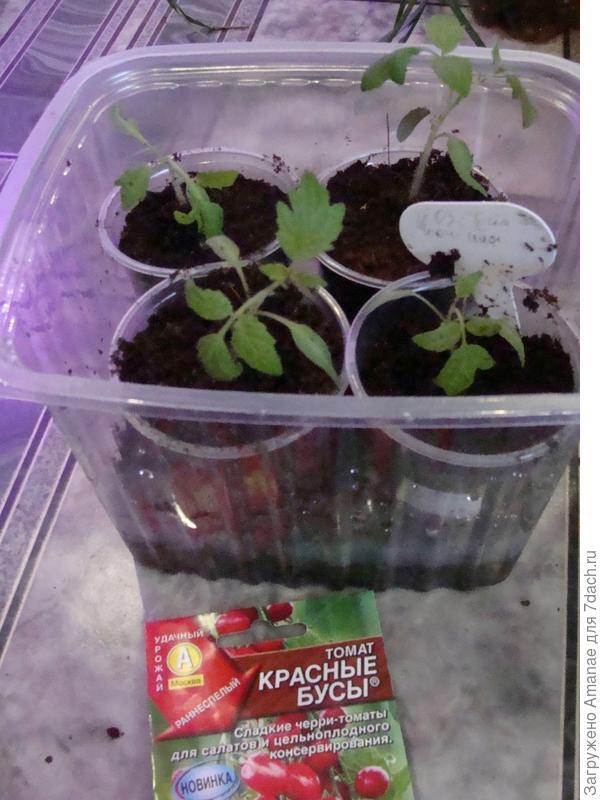 Оставила себе 4 растения