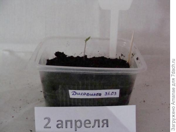 Самый первый росток