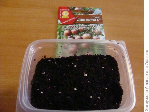 10 семян посеяны сухими