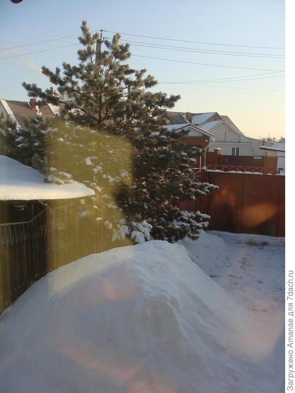Сосна у дома, снег, яркое солнышко.