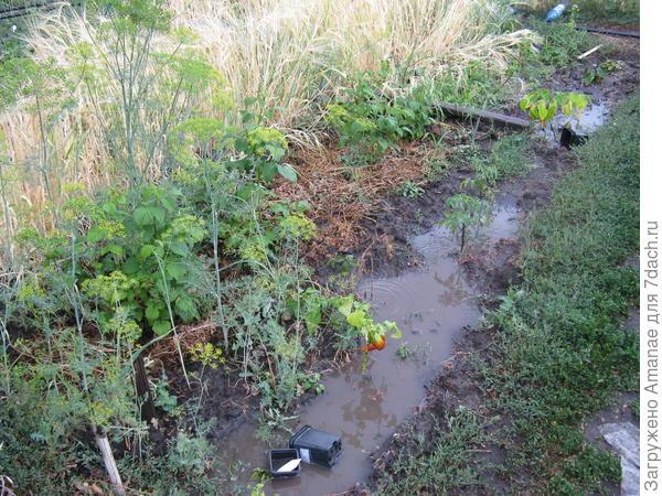 Возле молодой малины образовалось озеро, а полосу колосящегося ячменя  растрепали косые потоки дождя
