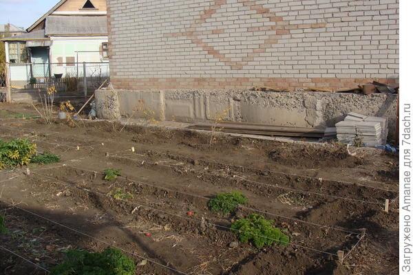 Возле дома образовался рядок ягодных кустарников