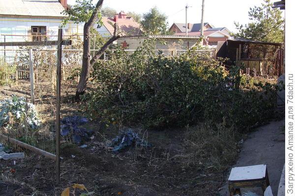 Спиленное дерево очень опасно сжигать возле дома