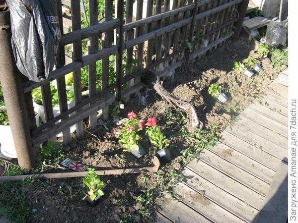 Прикидка растений