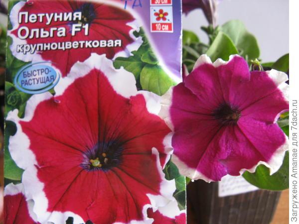 Ольга, первое цветение