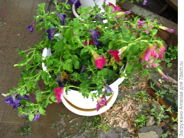 После дождя, вместе с МП розовой