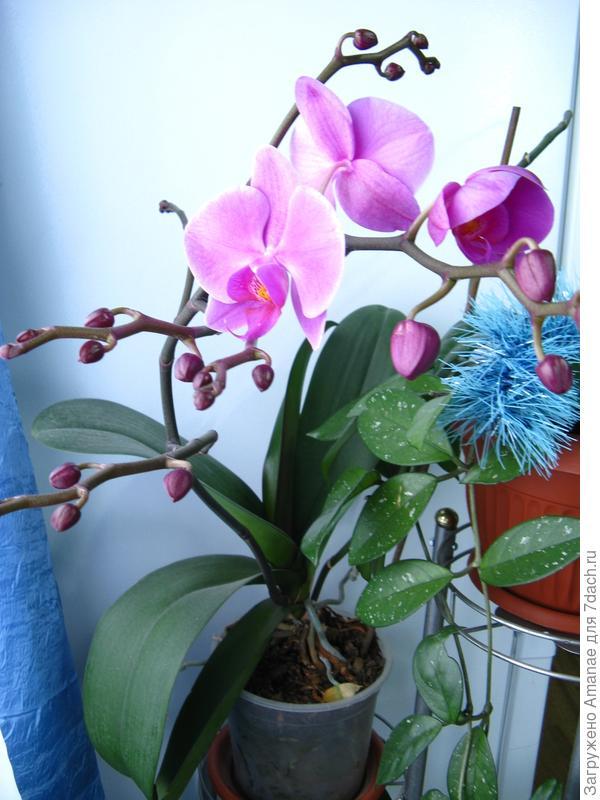 Первые цветы 6 января