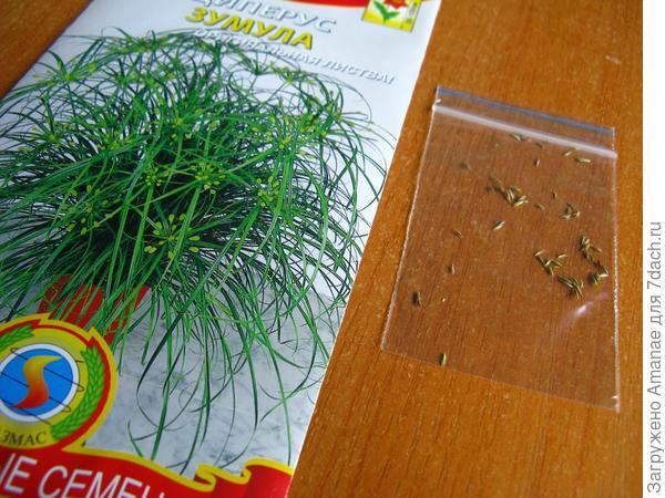 Циперус Зумула с пакетиком с семенами