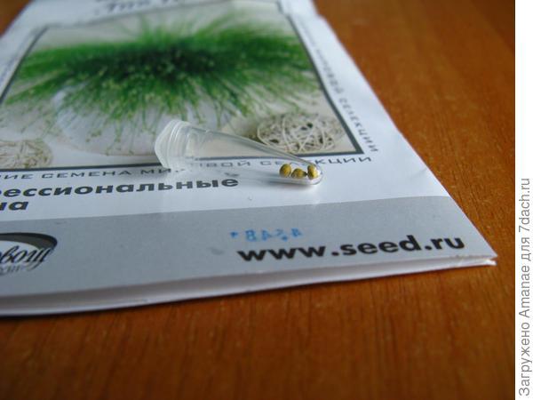 Колба с семенами изолепсиса