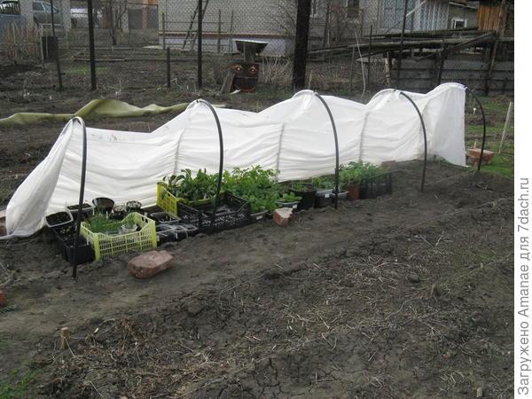 Парничок в апреле был уже загружен растениями