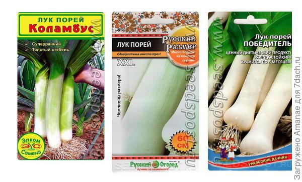 Репчатый и не только: разнообразная коллекция лука для экзотического огорода