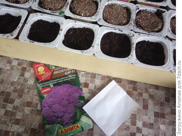 Капуста 'Фиолетовый шар' - печальная красавица поздней осени. Итог