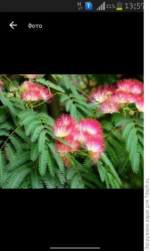 ни это ли растение это, и как называетса