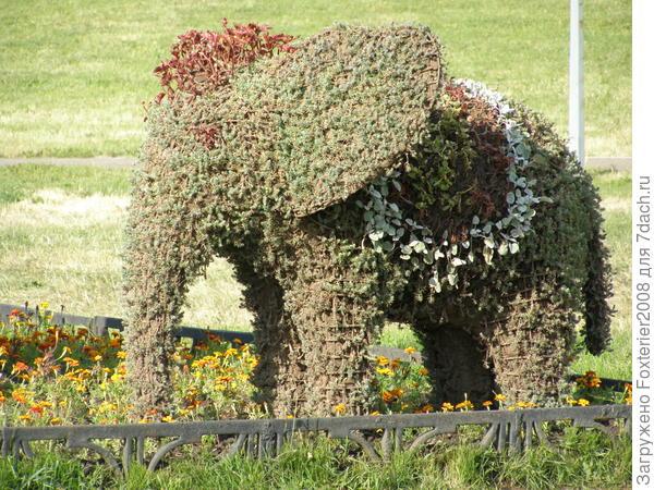 цветочный слоненок