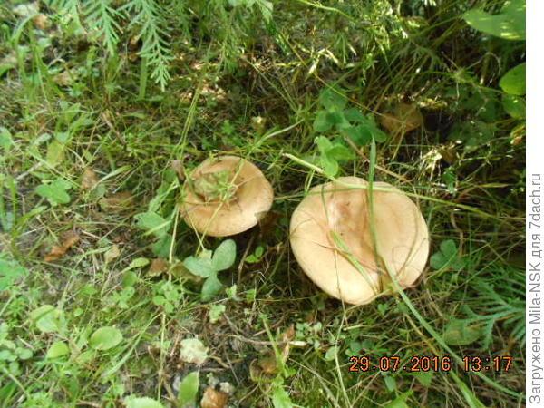 В палисадник по грибы...