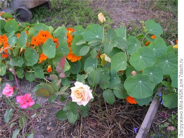 мои первые цветы...
