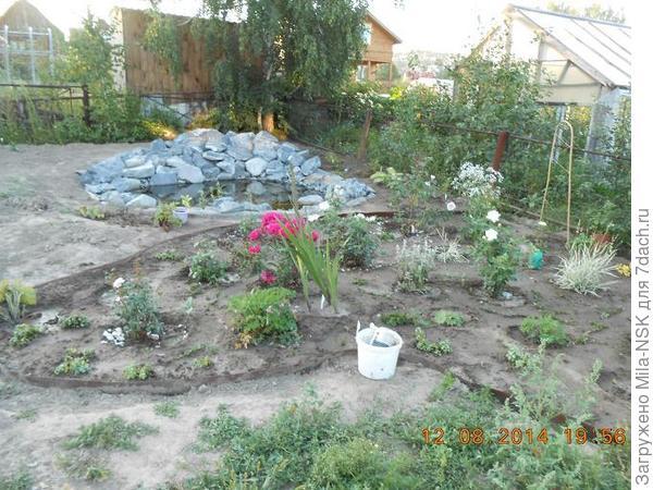 Новый цветник в августе 2014. Между розовых кустов видны небольшие кусочки только что посаженного вербейника монетчатого.