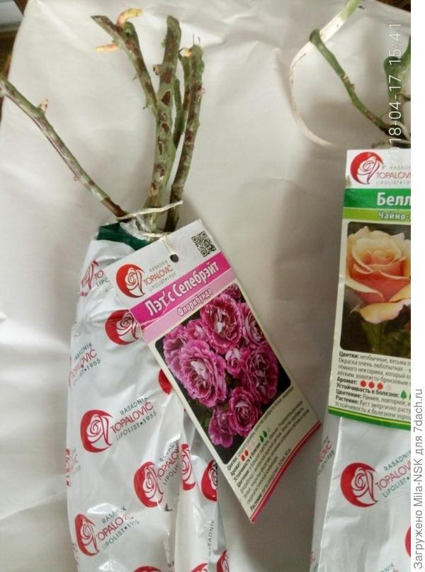 Розы вот этого питомника Топаловичей я заказала в этом году в Гаршинке впервые. Их упаковка и картинка на упаковке отличается от упаковки другого питомника Топаловичей (на фото ниже)