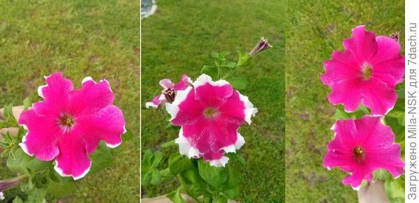 Сравнение цветоков трех разных растений
