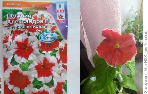 Сравнение цветков на пакете и реального