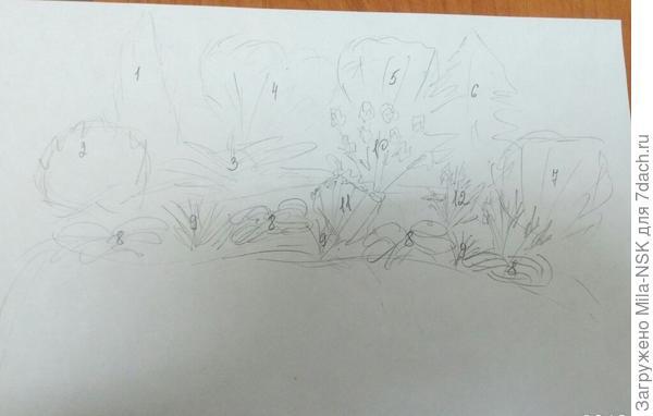 Это основные растения. Между ними можно понатыкать весенне цветущих луковичных