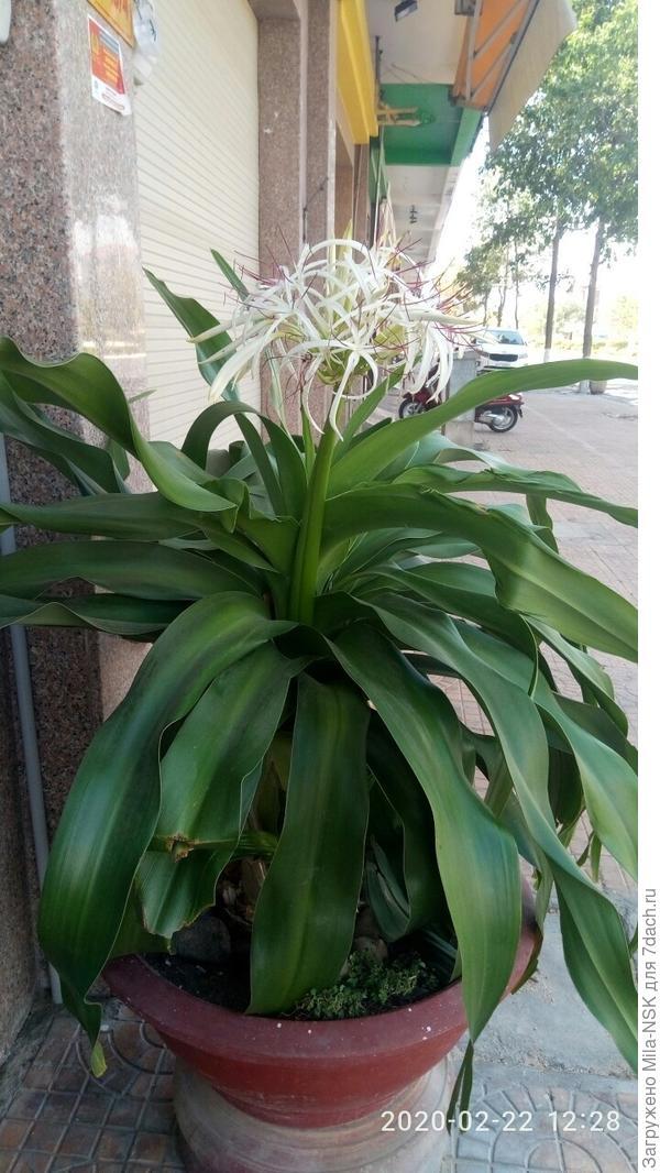 Неизвестное мне растение