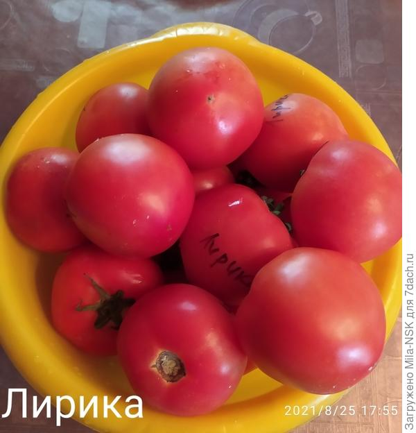 Урожай на 28 августа