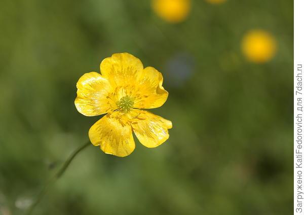 Красота одного цветка. Мой любимый сюжет.