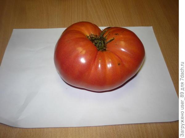 вид помидора сверху