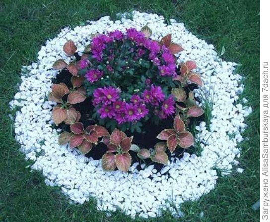 Каталог-таблица цветов для посева семян в грунт - посмотреть и скачать