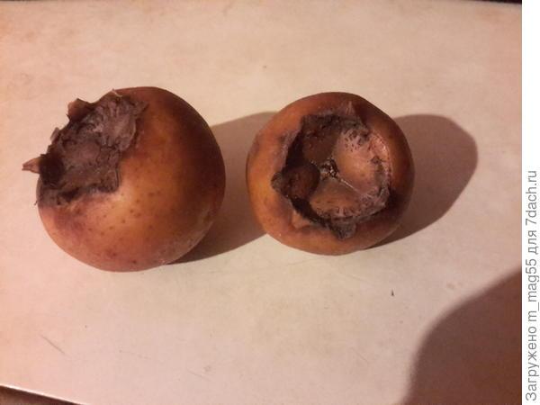 У нас в Дагестане эти плоды называют - шишками.