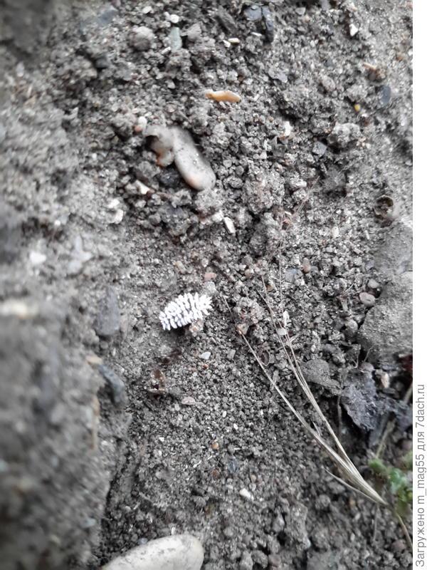 Что за насекомое это?