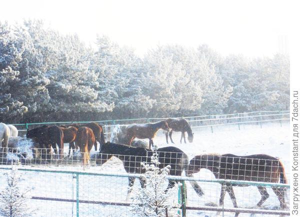 Лошади резвятся