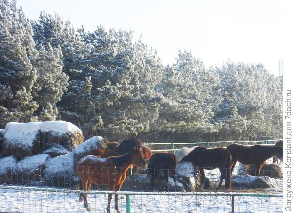 Лошади проявляют интерес к людям