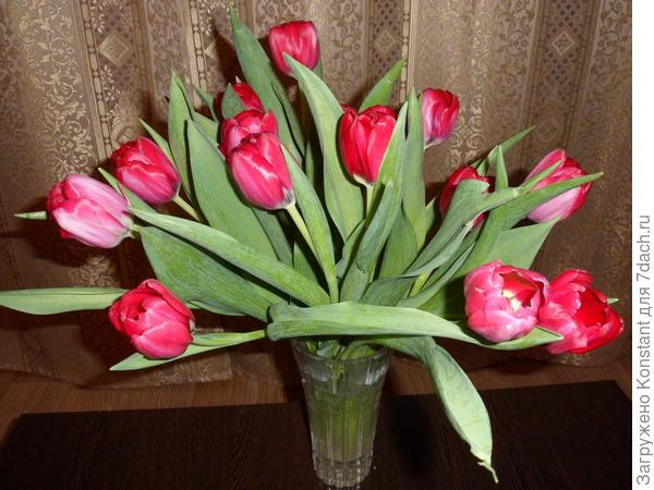 Милые семидачницы! С праздником весны Вас! Желаю Вам простого женского счастья!