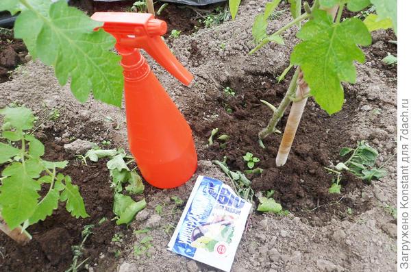 Внекорневая подкормка томата для завязи