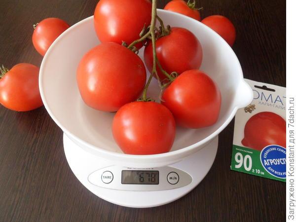 Вес кисти томата 678 грамм.
