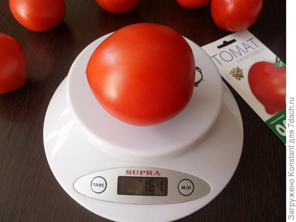 Вес среднего томата 161 грамм.