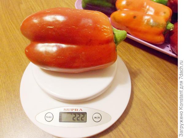 Вес перчика 222 грамма.