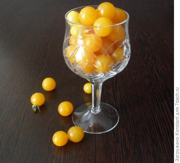 Томат Оранжевый коктейль F1.