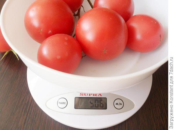 Кисть томата Грифон F1 весом 506 граммов.