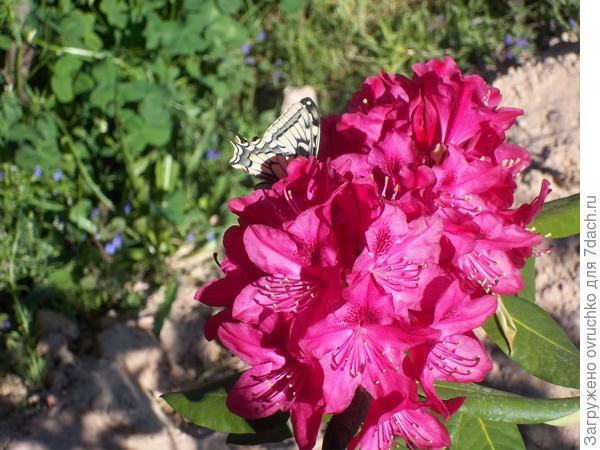 Бабочкам от тоже нравится!