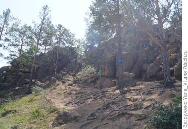 Дальше нужно лезть на скалы, цепляясь за корни сосен