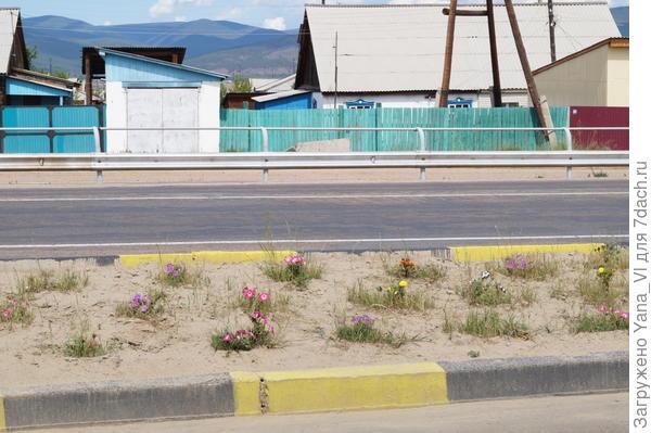 цветы в песке